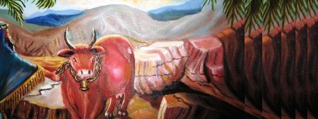 פרשת חוקת: הפרה האדומה: קוים לדמותה של מצוה מסתורית