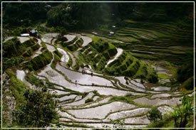 טרסות אורז בפיליפינים. צילום:jonrawlinson.com