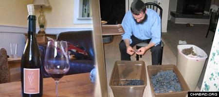 Rabbi Elchonon Tenenbaum sorts through grapes at his Napa Valley home.