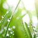 Rain and Dew