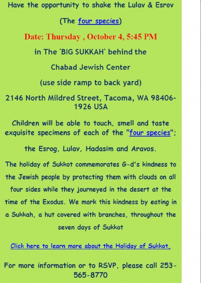 falafle in the sukkag web #2.jpg