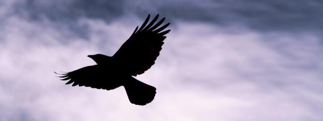 Selfish As A Raven Inner Stream Parshah