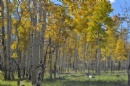 Yellow Aspen Hike