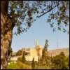 זית ביהדות: סיפורו של פרי חשוב