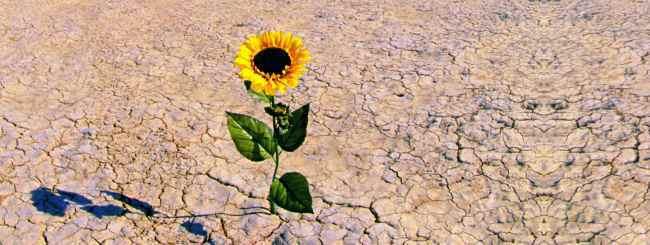 Les maîtres 'hassidiques: Le fruit d'une terre aride