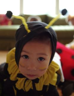 Why Am I Named After a Bee? - The Jewish name of Deborah (Devorah