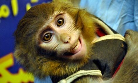 ahmadinejad monkey