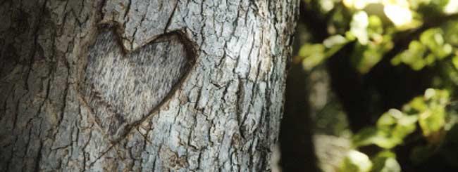 Artigos: Não Mate o Amor
