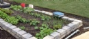Planting Our New Vegetable Garden