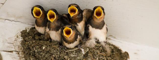 Parsha Class: Sending Away the Mother Bird