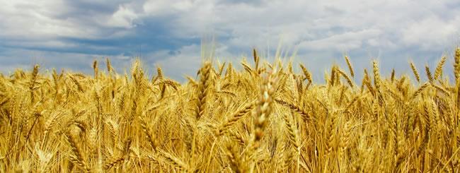 Уроки главы: Урожайный урожай