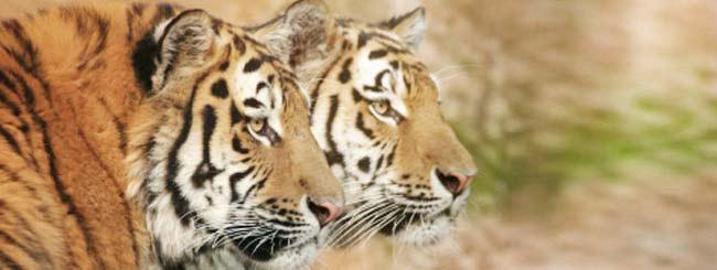 Artigos: Como reeducar o animal?
