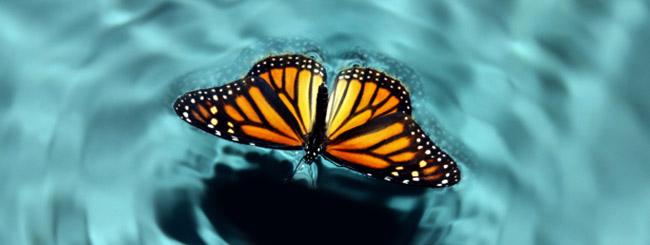 Artigos: O Oásis da Transformação