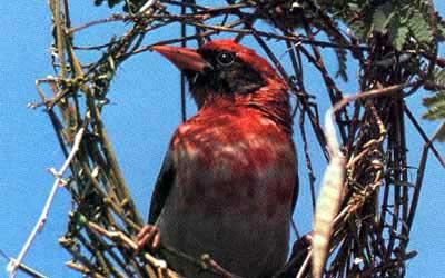 The Weaver Bird Nature S Wonderland Jewish Kids