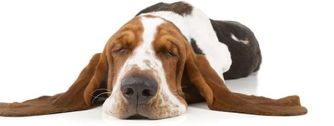 פרשת בא: לא יחרץ כלב לשונו: הנס ה'קטן' שהיה נס גדול