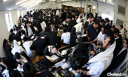 There was nonstop activity at the Ohel on Tuesday. (Photo: Chaim Perl)