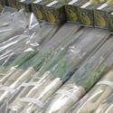 Sukkot Orders 2016