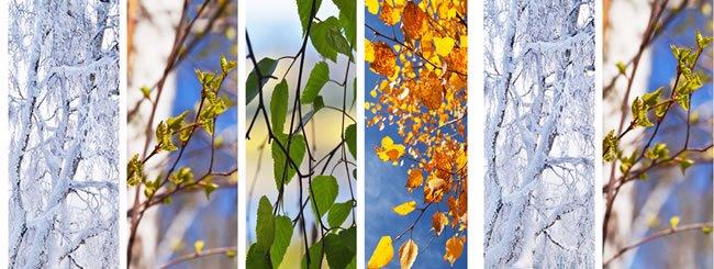 Jewish Holidays: Nine Ways to Be Like a Tree