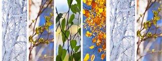 Nine Ways to Be Like a Tree