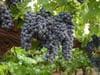 Seven Wonderful Fruits of Israel