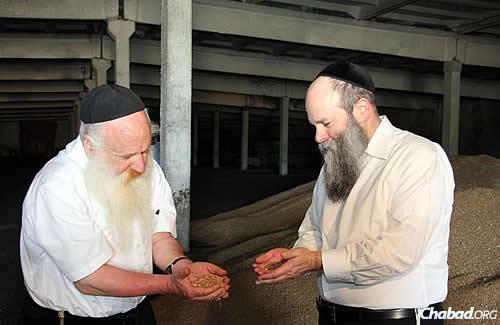Ashkenazi, left, and Kaminezki examine kernels to ensure none are already sprouted. (Photo: DJC.com.ua)