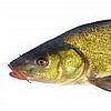 The Kabbalah of Kosher Fish