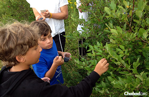Nature excursions keep the kids busy in the great outdoors.