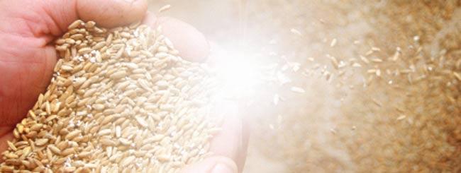 Gedanken: Himmlisches Brot und himmlische Lehren für jedermann