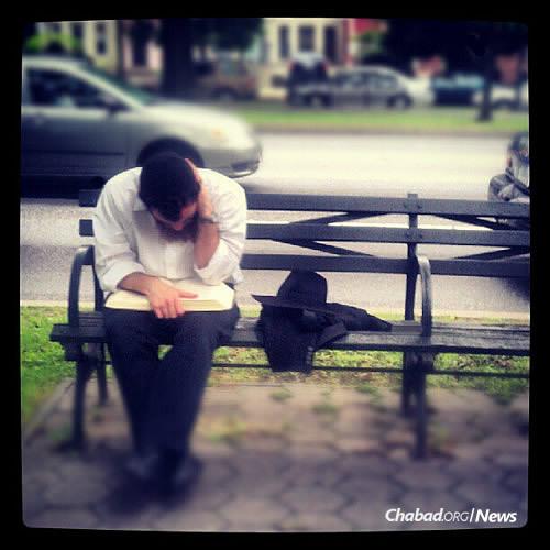 Deep in study on a bench along Eastern Parkway near Lubavitch World Headquarters in the Crown Heights neighborhood of Brooklyn, N.Y. (Photo: Mordechai Lightstone)