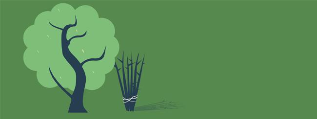 Les maîtres 'hassidiques: Douze bâtons