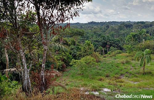 One of Peru's many verdant jungles