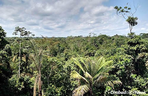 A top-down view of the jungle foliage