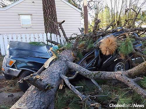 Huge pine trees were toppled by the winds, crushing cars in their wake. The rabbi plans to use some of the wood to created a menorah this Chanukah in the city center.