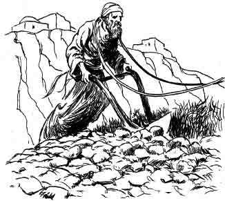 """""""So Rabbi Pinchas went out and ploughed his field, and planted the grains of barley from two sacks…"""""""