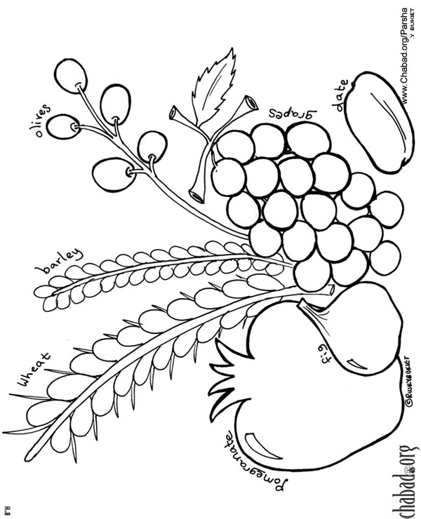 Eikev Coloring Pages Family Parshah Parshah