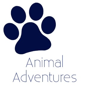 animal adventures.jpg