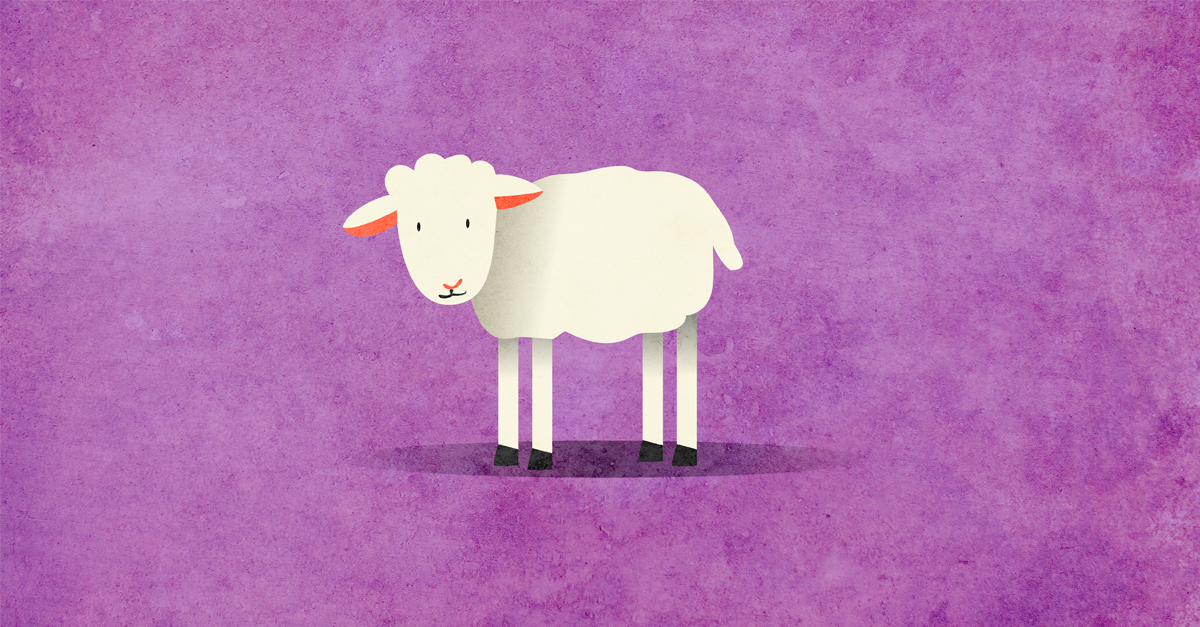 Have You Slaughtered Your Sheep Yet? - Passover