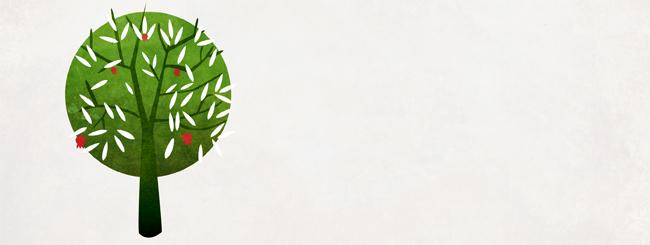 Аудио- и видеолекции по недельной главе: Женатое дерево