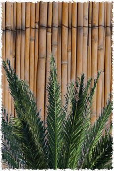 הסכך עשוי מצמחיה לא מעובדת. לא כל דבר יכול לשמש כסכך.